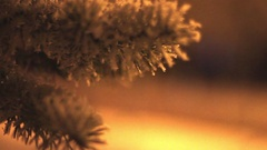 The Branch of a Christmas Tree is in The Snow, and on the Background of the Cars Stock Footage