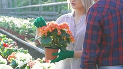 Male and female gardeners checking and spraying flowerpots in gardenhouse Stock Footage
