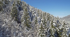 Neverending Forest Covered In Cold Snow Stock Footage