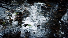 Raindrops On Pool In The Forest Closeup Stock Footage