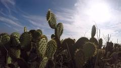 Cactus Field - timelapse Stock Footage