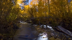 MoCo Astro Timelapse of Fall Foliage River at Moonset in Eastern Sierra -Tilt Up Stock Footage
