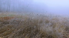 Dry grass with hoarfrost crystals in a field near the woods and mist on a winter Stock Footage