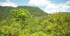 Rain forest in Peru, South america Stock Footage