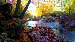 Small forest river Stock Footage