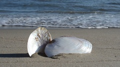 Cockleshells on sand against the background of waves. Stock Footage
