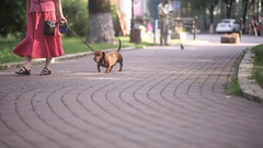 Old woman walking with dog in the park Stock Footage