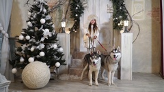 Girl with Husky dogs stands on the threshold near the Christmas tree Stock Footage