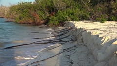 Long roots of mangrove trees  through the sandy shore submerged in sea. Stock Footage