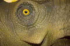 A yellow and black eye of reptile or animals of the jungle Stock Photos