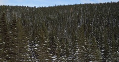 4k Aerial Of Never-ending PIne Tree Forrest On Winter Day Stock Footage