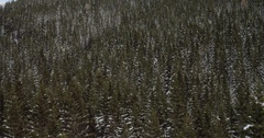 Never Ending Tree Tops In The Winter Time Stock Footage