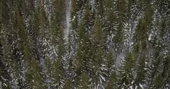 Neverending Tree Tops From Birds Perspective Stock Footage
