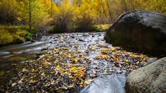 Astro Timelapse of Moonlit Fall Foliage River in Eastern Sierra -Tilt Up- Stock Footage