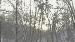 A man wades through a forest in winter . POV. Stock Footage