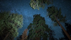 Sequoia Milky Way Time Lapse of Grant Grove Kings Canyon 6K Stock Footage
