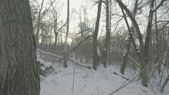 Surviving in the woods is the snow . POV. Stock Footage