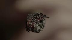 Smoking a cigar (close-up) Stock Footage
