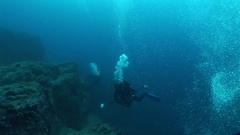Coral life diving Mozambique South Africa Underwater Video Stock Footage