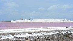 Pink waters lake, salt pond - Caribbean, Bonaire Stock Footage