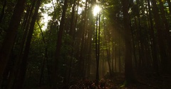 Magnificient autumn forest with sun and mist gliding among them Stock Footage