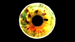 Closeup view of Zombie Eye Iris (Light Multiple Color) Stock Footage