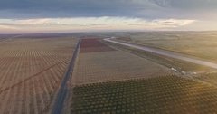 Aerial of Farming Almond pistachio trees Crops Field Vegetation Agricultural Stock Footage