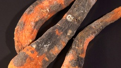 Rotten carrot on a black background Stock Footage