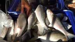Hand pick fresh fish in Asia wet market Stock Footage