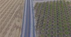 Aerial of Farming Almond pistachio trees and power lines Stock Footage