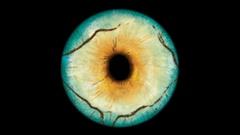 Closeup view of Lizard Eye Iris (Light Blue, Yellow with texture) Stock Footage