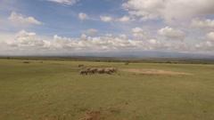 White Rhinos on a plain Stock Footage