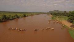Big herd of elephants crossing a river, 4k Aerial Stock Footage