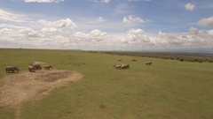White rhinos aeria, 4kl Stock Footage