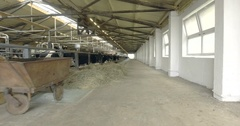 Cows in the barn on a farm Stock Footage