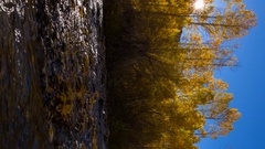 MoCo Timelapse of Fall Foliage by River at Sunrise in Eastern Sierra -Vertical- Stock Footage