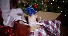 Cat catching wrapping paper in christmas present box Stock Footage