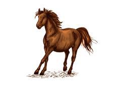 Arabian brown stallion galloping on horse races Stock Illustration