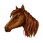 Brown graceful horse with sad eyes portrait Stock Illustration