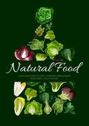 Natural food poster of leafy salad greens Stock Illustration