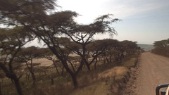 CLOSE UP: Game driving past beautiful acacia trees in African savannah woodland Stock Footage