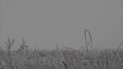 Winter meadow snow-covered dry flowers and grass swaying in the win, Ukraine. Stock Footage