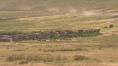 AERIAL: Beautiful maasai village and tribe herding animals on pasture in Africa Stock Footage