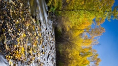 Astro Timelapse of Moonlit Fall Foliage River in Eastern Sierra -Vertical- Stock Footage
