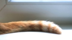 Tail of red cat sitting on windowsill Stock Footage
