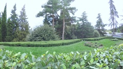 Manicured bushes in park Stock Footage