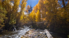 Astro Timelapse of Fall Foliage River at moonset in Eastern Sierra -Zoom Out- Stock Footage