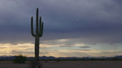 Saguaro Cactus with Overcast Skies Stock Footage