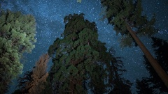 Sequoia Milky Way Time Lapse of Grant Grove Kings Canyon Dolly L Stock Footage