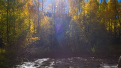 Timelapse of Fall Foliage by River at Daytime in Eastern Sierra -Long Crop- Stock Footage